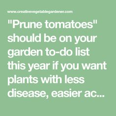"""Prune tomatoes"" should be on your garden to-do list this year if you want plants with less disease, easier access, earlier harvests, and more fruit. Pruning Tomato Plants, Tips For Growing Tomatoes, Grow Tomatoes, Tomato Farming, Tomato Garden, Vegetable Garden, Sweet Pic, Photosynthesis, Raised Garden Beds"