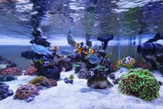 The Ultimate Reef Tank Aquascaping Guide – Creating Your Paradise. The Spellbinding Power of Reef Tank Aquascaping In Our Full Guide With Photo Examples. Saltwater Aquarium Setup, Aquarium Sump, Coral Reef Aquarium, Saltwater Fish Tanks, Marine Aquarium, Aquarium Aquascape, Marine Tank, Marine Fish, Nano Reef Tank