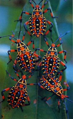 No son mariquitas, pero me encantan!!! They´re not ladybugs, but I love them!!!