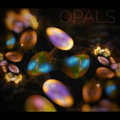 """""""Opals II"""" More opals from an imaginary deep forest. Precious stones found in an imaginary forest. :::::Made with JWildfire mini + Snapseed:::::::: 🌌 Deep Forest, Snapseed, Opals, Art Day, Insta Art, Fractals, Contemporary Art, Abstract Art, Digital Art"""