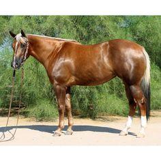 beautiful horse palomino horse