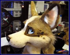 "chompass: "" diarrheaworldstarhiphop: "" ryxchordata: "" fuckyeahfursuiting: "" Australian Cattle Dog WIP - by FirestormSix "" OH MY GOD "" I find it absolutely hilarious and amazing over how much more..."