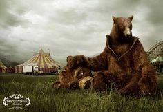 bears | Tumblr