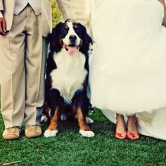 Beautiful wedding and engagement photos with Scotty the dog! Cute ways to include your pet in your big day.
