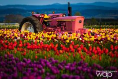 Pink Tractor at Sunset by William Dodd on 500px