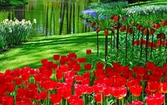 I'll take you traveling to see the beautiful of flower garden in Europe. Personally these gardens are the most beautiful flower garden in Europe. World Most Beautiful Place, Most Beautiful Gardens, Beautiful Flowers Garden, World's Most Beautiful, Wonderful Places, Beautiful Roses, Amazing Places, Beautiful Pictures, Tulips Garden
