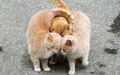Top 35 des câlins d'animaux, le web qui fait du bien (on parie que vous allez fondre ?) (ᵔᴥᵔ)