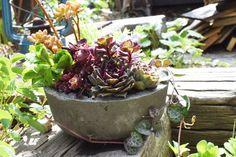 「ごちそうさまでした」って、筆者のランチ紹介ではありません。 今回はこの不要になったカップラーメンの容器を型に… Vegetables, Garden, Plants, Handmade, Garten, Hand Made, Lawn And Garden, Vegetable Recipes, Gardens