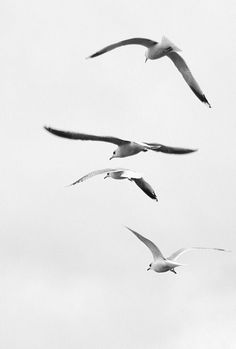 To Be Free 2 - sea gulls | photography black & white . Schwarz-Weiß-Fotografie . photographie noir et blanc | Photo: Aliisa Häyry |