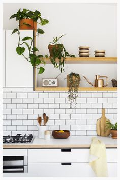 Indoor plants provide a textural element to this white plywood kitchen | cantileverinteriors.com