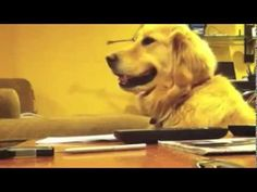 This Dog Loves Music. But You've Gotta See The Look On Her Face When It Stops!!!