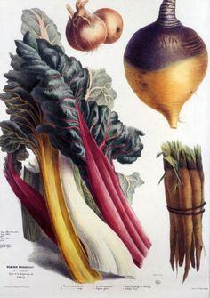 Foto: anatomia dos vegetais