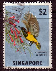 Singapore 1962 Yellow-bellied Sunbird Bird Fine Used SG 76 Scott 68 Other Asian and British Commonwealth Stamps HERE!