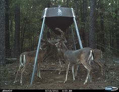 Boss Buck offers a complete line of gravity, protein and automatic, handing & tripod deer feeders, deer stands, deer blinds and deer feeder parts and accessories. Deer Feeders, Hunting Clothes, Goats, Protein, Photos, Animals, Pictures, Animales, Animaux