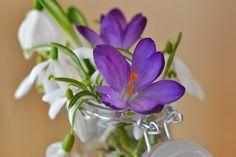 Crocus, Perce Neige, Muguet, Fleurs