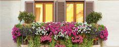Conheça as plantas ideais para cultivar em sacadas no verão - Engana-se quem pensa que uma sacada ou terraço sujeito à grande incidência de sol e vento não pode ter vasos ou floreiras frondosas. Segundo paisagistas e arquitetos, há muitas opções de plantas que, se tratadas adequadamente, sobrevivem bem às rajadas e farta exposição solar. A falta de espaço t... - http://www.ecoadubo.blog.br/ecoblog/2016/06/12/conheca-as-plantas-ideais-para-cultivar-em-sacadas-no-v