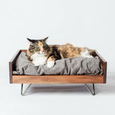 Image result for cat bed