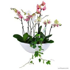 Basket of #orchids