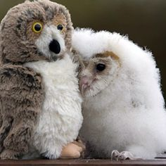 Substitute mother... is a teddy-owl!
