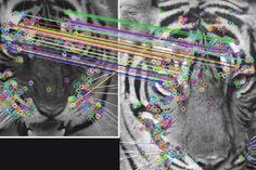 (via UK company aids conservationists with tiger facial...
