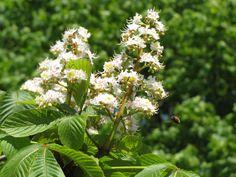 Jitrocel: Bylina, která účinně léčí onemocnění dýchacích cest - www. Herbalism, Health, Plants, Diet, Syrup, Herbal Medicine, Health Care, Plant, Planets