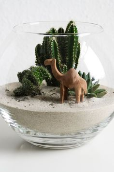 DIY miniature desert DIY little desert in the glass Terrarium Cactus Terrarium, Garden Terrarium, Glass Terrarium, Cacti And Succulents, Planting Succulents, Sand Decorations, Decoration Plante, Terraria, Diy Garden