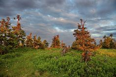 Summer evening on mountain meadow Photo Tree, Summer Evening, Photos For Sale, Fine Art America, Photographs, Fine Art Prints, Mountain, Trees, Design Inspiration
