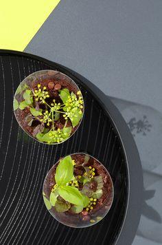 edible terrariums