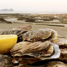 "@dimval's photo: ""#oysters in #cancale | #france #bretagne #brittany #saintmalo  #breeding #lemon #beach #food #foodporn #instafood #yum #yummy #yumyum #delicious #eat #sharefood #tagsta #tagsta_food #favorite #eating #foodgasm #foodpics"""