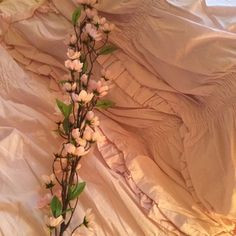 aesthetic, flowers, and peach image Peach Aesthetic, Aesthetic Colors, Aesthetic Beauty, Flower Aesthetic, Just Peachy, Mo S, Looks Cool, Pastel, Pretty
