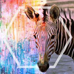Zebra, Wandbild, Digitalgrafik, Geschenkidee, Natur, Color, Grafikdesign, Inspirationen, wunderschön Web Banner, Flyer, Grafik Design, Portrait, Giraffe, Animals, Inspiration, Pictures, Graphics