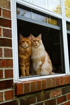 Two kitties checking out the world. They look like two old friends, discussing what they see, quite seriously.❤