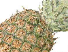 textured fruit drawing - Google Search