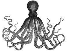 sweet octopus print