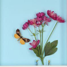 Spring Garden - Artist Photographic Print   DegreeArt.com The Original Online Art Gallery
