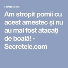 Am stropit pomii cu acest amestec și nu au mai fost atacați de boală! - Secretele.com Garden Pool, Herb Garden, Fruit Trees, How To Get Rid, Grape Vines, Good To Know, Diy And Crafts, Health, Gardening
