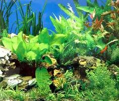 Seaweed Extracts, a key ingredients in our products
