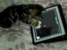 Video Games For Cats Finally Cats Can Kill The Laser #gaming #games #gamer #videogames #videogame #anime #video #Funny #xbox #nintendo #TVGM #surprise