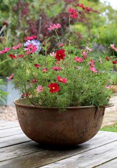 flower pots outdoor It's important to know what to put in certain pots. Frothy flowers such as these can be perfect (Picture: Clara Molden) Container Flowers, Container Plants, Container Gardening, Succulent Containers, Vegetable Gardening, Small Cottage Garden Ideas, Cottage Garden Design, Cottage Gardens, Big Garden