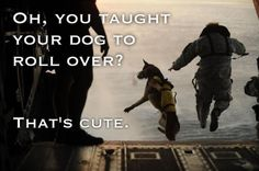 military service dogs - Google Search