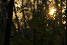 Sunset by Finta  Kolos on 500px