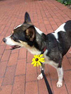 Two adoptable dogs in Washington, DC  Small •  Female