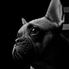 French Bulldog Portrait by Christian Rehm, via 500px