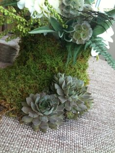 succulents with moss by Les Fleurs
