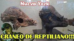 ¡Exclusiva cráneo de reptiliano-Atlántida anunnaki lagarta