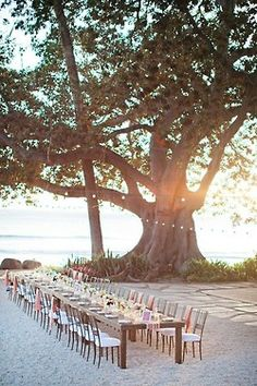 Grand tree, grand banquet. still love the idea of a wedding on the beach