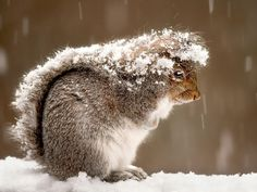 Winter Squirrel. I knew this tail would come in handy for something!