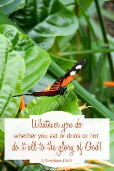 Butterfly | Scriptur