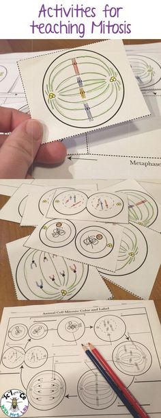 Coloring and cut and paste activities for teaching mitosis