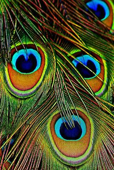 'Eyes have it' | by Rodney55, via Redbubble